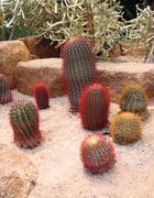 Cactus in nong nooch tropical botanical garden, pattaya, thailand Stock Photos