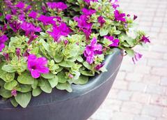 Flowerbeds Stock Photos