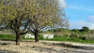 Stock Video Footage of Almond trees, beehives and blue sky