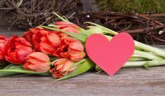 tulips and heart - stock photo
