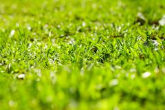 Image of fresh green grass outdoors Stock Photos