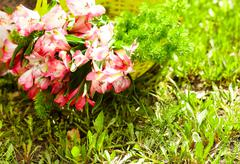 Bunch of pinkish flowers lying in basket Stock Photos