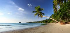 Stock Photo of Coast beach with lonely palm tree