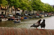 Stock Photo of pair of pigeons at each other in an old brick bridge on the amsterdam canal b