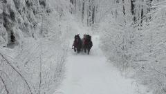 sleigh ride - stock footage