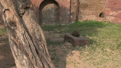 Monkey in Agra park eating birds food , India Stock Footage
