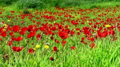 Flowers, grass and sun Stock Footage