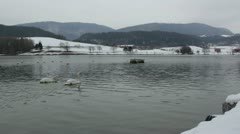 Slovenia landscape [swans]  Stock Footage