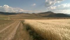 Grain field panoramic view Stock Footage