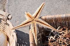 marine story - stock photo