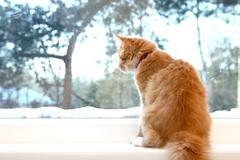 cat look through the window - stock photo