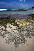 Beach rock  in  republica dominicana Stock Photos