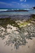 beach rock  in  republica dominicana - stock photo