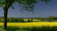 Canola Field on Rügen Island - Baltic Sea, Northern Germany Stock Footage