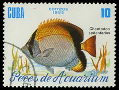 cuba-circa 1985: a stamp printed in cuba shows fish chaetodon sedentarius, ci - stock photo