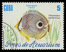 cuba-circa 1985: a stamp printed in cuba shows fish chaetodon capistratus, ci - stock photo