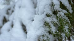 Spruce in the snow - stock footage
