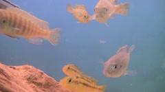 Aquarium, Fish Tank, Goldfish as Pets Stock Footage