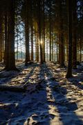 Sun through a dark winter forest - stock photo