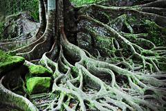 Stock Photo of tree roots