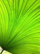 Giant tropical leaf pattern close-up, tropical trees, rainforest and nature Stock Photos