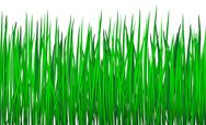 Stock Illustration of grass