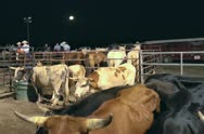 Rodeo Stock behind the arena at a night rodeo Stock Footage