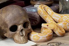 tiger albino python - stock photo