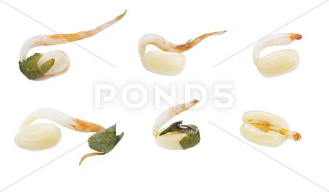 Stock photo of wheat seeds