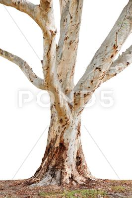 Stock photo of tree trunk