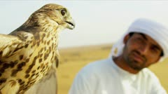 Close Up Tethered Bird Prey Arab Falconers Wrist - stock footage