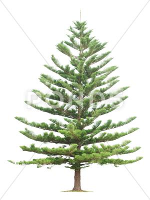 Stock photo of tree on white background