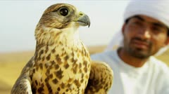 Close Up Arabic Male Displaying Trained Saker Falcon Stock Footage