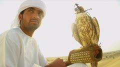 Saker Falcon Balanced Arabic Male Falconers Glove Desert Stock Footage