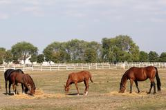 Horses and foals on the farm Stock Photos