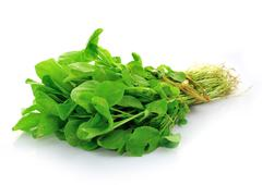 Choy sum, a kind of chinese vegetable in isolated background Stock Photos