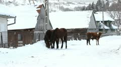 Two horses and one cow on a village snowed road Stock Footage