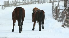 Domestic animals passing by a snowed village road - stock footage