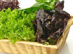 Fresh salad leaves assortment Stock Photos