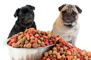 Stock Photo of pugs and dog food
