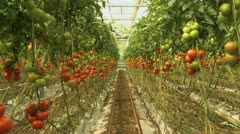 Tomato seedlings travelling 1 - stock footage