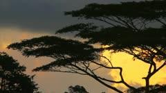 Stunning Tropical Sunrise Stock Footage