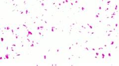 Falling Sakura Petals Cherry Blossoms DOF - stock footage