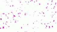 Stock Video Footage of Falling Sakura Petals Cherry Blossoms DOF