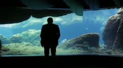Man Watching Fish at Aquarium Stock Footage