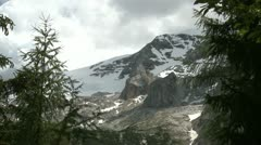 Mountain firs - stock footage