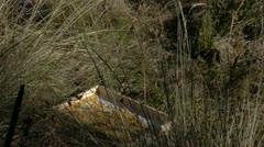 Wild adult javelina fighting over food. Clip 4 Stock Footage
