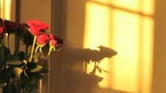 Beautiful Roses Vase Timelapse Of Sun and Shadows Stock Footage