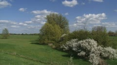 Hawthorn  (Prunus spinosa) blooming in Dutch river landscape Stock Footage
