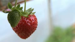 Strawberry 03 Stock Footage